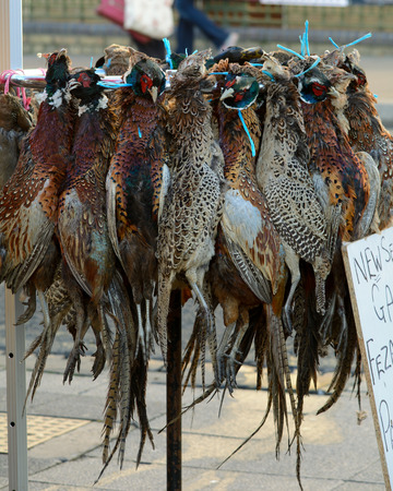 shop for animals: Phesants and ducks for sale at market