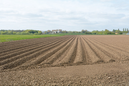 the ploughed field: Ploughed field on farm