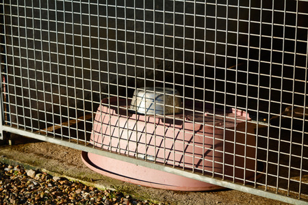kennel: Dog bowl and bed in Dog Rescue centre kennel