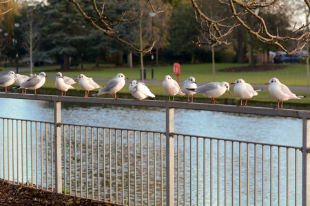 watch groups: Seagulls standing on metal railings