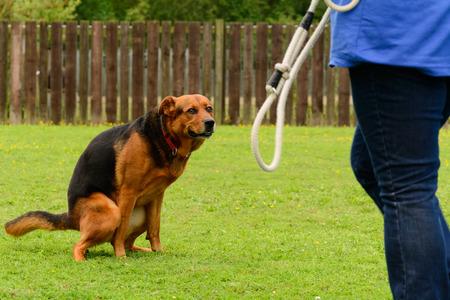 en cuclillas: Perro del híbrido en cuclillas en el parque