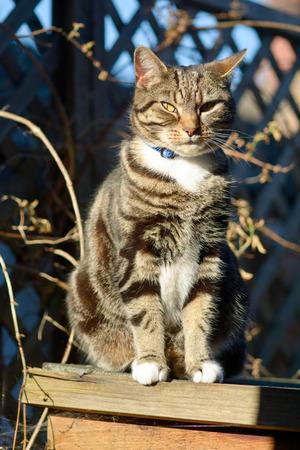 shaft: Tabby cat sat in shaft of sunlight Stock Photo