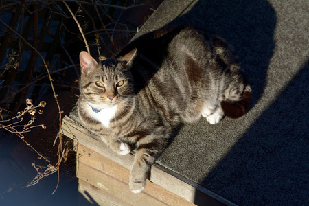 shaft: Tabby cat lying in shaft of sunlight