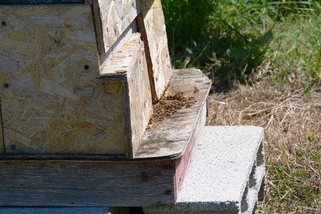 bee hive: Entrance to bee hive with bees