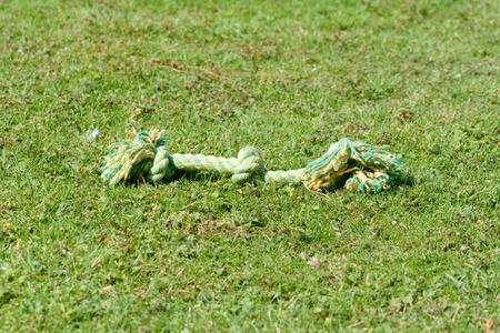 pull toy: juguete de la cuerda del tir�n del perro en hierba en parque