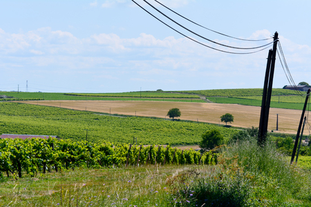 french countryside: Landscape with vineyard wheat fields  in French countryside