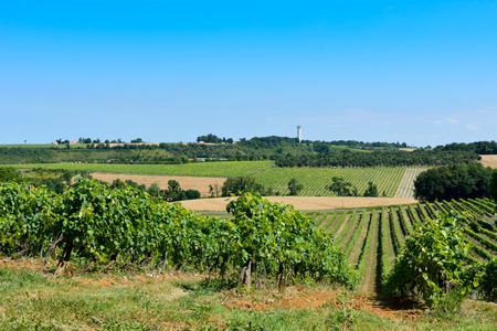 french countryside: Landscape with vineyard wheat fields and water tower in French countryside