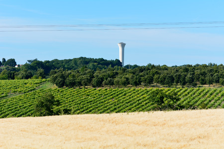 water tower: Landscape with water tower vines and wheat field in France Stock Photo