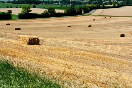 hay bales: Hay bales in field Stock Photo