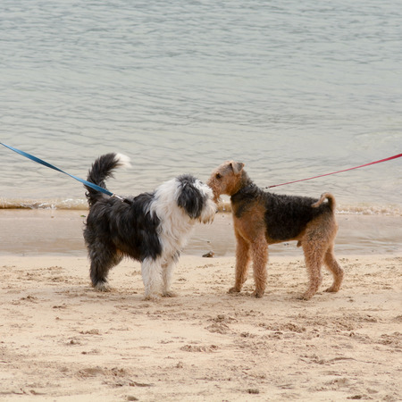 Two dogs meeting on beach Stock Photo