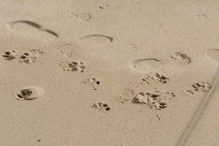 huellas de perro: Huellas humanas y de perro en la playa