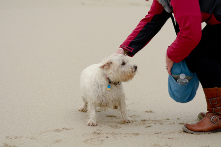 stroked: Scottish terrier being stroked by woman on beach