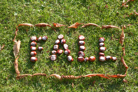 conkers: Fall with leaf border - word spelled out in conkers on grass