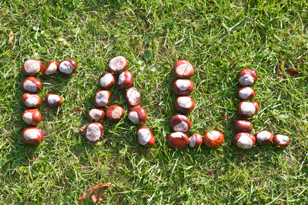 conkers: Fall - word spelled out in conkers on grass
