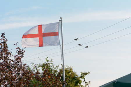 george: Flag of St George flying in garden