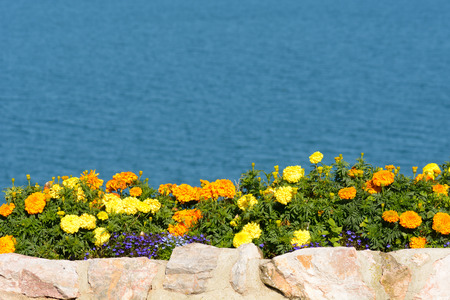 marigolds: Flowerbed with marigolds at seaside