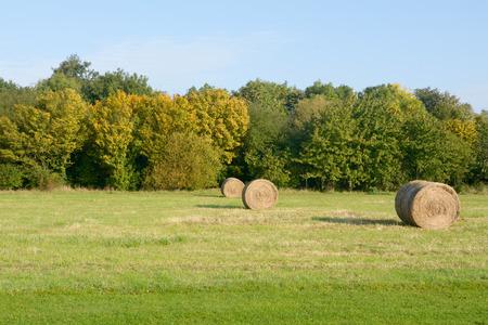 hay bales: Hay bales in meadow