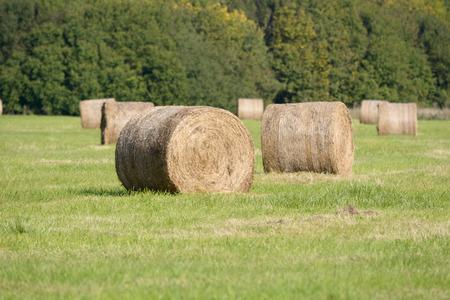 bales: Hay bales in meadow