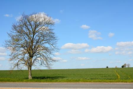 edge: Tree growing on edge of field