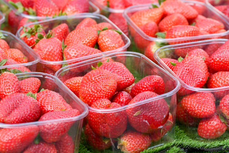fragaria: Strawberries in punnets Stock Photo