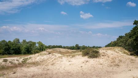 Sand dunes in Letea forest, Romania