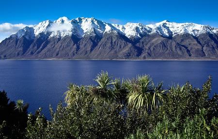 franz josef: Shot of Franz Josef Glacier in New Zealand with palms Stock Photo