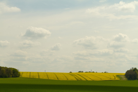 scenic view: A scenic view of Yellow Mustard Fields in the Southwest of England on a sunny day Stock Photo