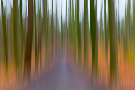 belgie: A conceptual photo using slow shutter speed of trees in a forest showing green, orange leaves and lavender colours