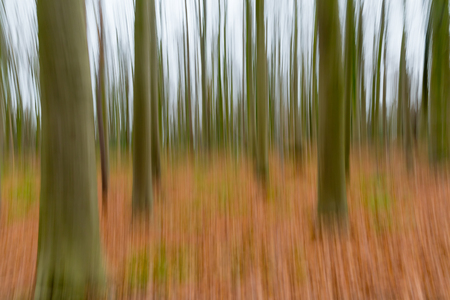 belgie: A conceptual photo using slow shutter speed of trees in a forest showing green and orange leaves