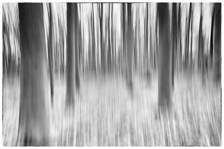 belgie: A black and white photo of a conceptual photo using slow shutter speed of trees in a forest showing green and orange leaves