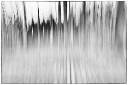 belgie: A black and white photo of a conceptual photo using slow shutter speed of trees in a forest showing leaves and the path in Europe Stock Photo