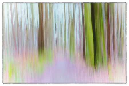 belgie: A slow shutter speed coloured photo of trees in a forest showing green, orange leaves and lavender colours with a faded vintage filter in Europe Stock Photo