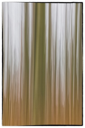 belgie: A conceptual photo using slow shutter speed of trees in a forest showing green and orange leaves with a soft vintage filter in Europe Stock Photo