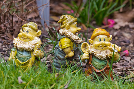 lawn gnome: Three Garden Gnomes - each of the dwarfs looking at different directions, standing on the grass in the garden amid the flowers