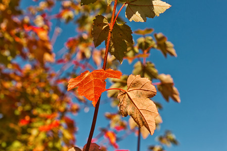 Red and Orange Autumn Leaves Background Stock Photo