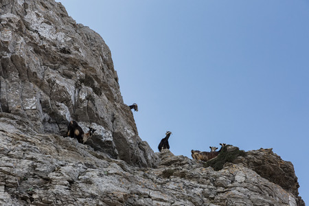 Mountain goats hiking in a Beautiful seascape view of the sea and rocky shore, the Aegean Sea, Amorgos Island, Greece Stock Photo