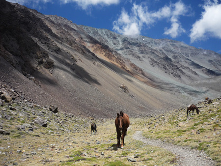Horses in Argentinian Andes Stock Photo