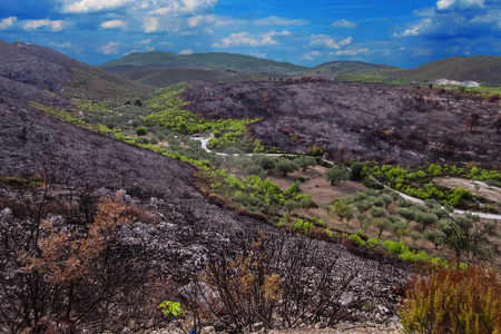Burnt land of Zakynthos island after fire, Greece 2017