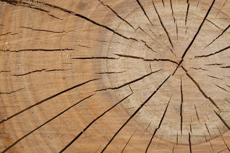 木プラムツリーの年輪から木製のテクスチャ