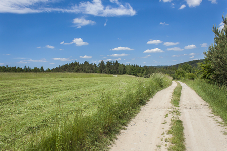 off path: Summer day and a dirt road leading to the forest on the horizon in the background. Blue sky with clouds. Rural road in Czech Republic.
