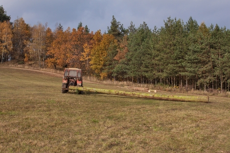 skidding: Tractor pulls the fallen tree. Working in the forest. Tractor is skidding cut trees out of the forest. Skidding timber.