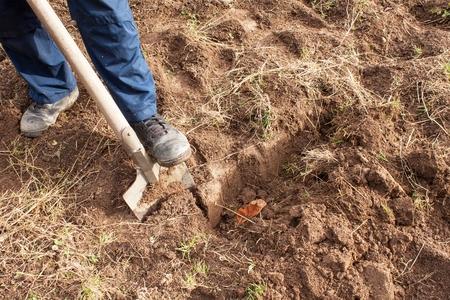 Man dig a shovel in the garden. Agricultural work. Preparing for the cultivation of vegetables. Autumn yard work. Standard-Bild