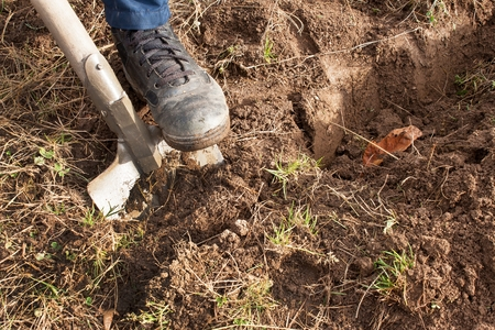 dig: Man dig a shovel in the garden. Agricultural work. Preparing for the cultivation of vegetables. Autumn yard work. Stock Photo