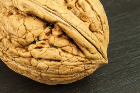 selenium: Detailed view of the structure of the shell of a walnut. Super foods for human brain. Healthy walnuts. Fresh walnuts