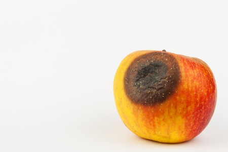 toxic substance: Moldy apple. Injection into red apple - Concept for Genetically modified fruit and syringe Stock Photo