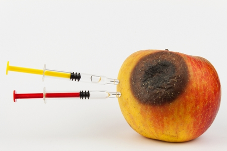 modified: Moldy apple. Injection into red apple - Concept for Genetically modified fruit and syringe Stock Photo