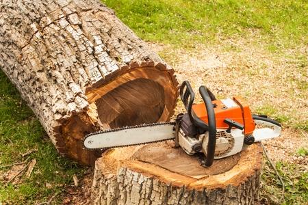 Professionele kettingzaag staat op walnotenboom. Benzine zag op de gevelde boom Stockfoto
