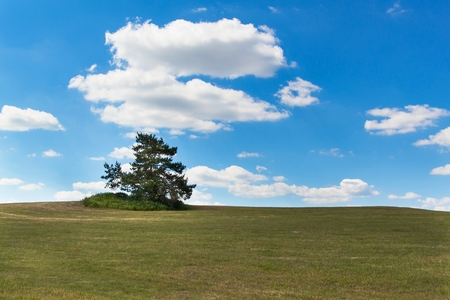 A lone tree on a meadow.  Pine tree on the horizon against a blue sky. Summer day Stock Photo