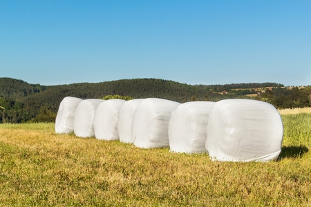 Rural scene with hay bales wrapped in plastic film.  Hay bales in plastic. Summer work on an agricultural farm