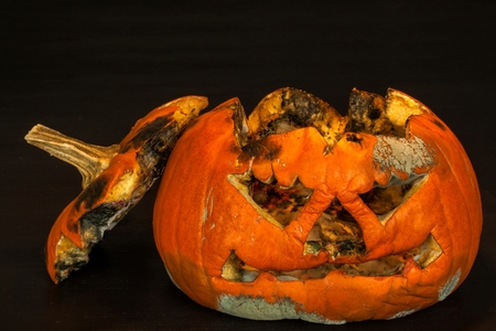 Moldy pumpkin. End of Halloween celebrations. The decaying pumpkin. Moldy food Stock Photo